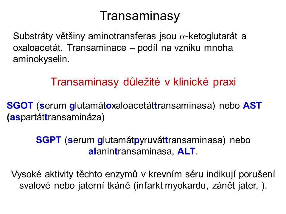 Transaminasy Transaminasy důležité v klinické praxi