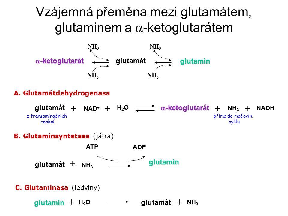 A. Glutamátdehydrogenasa