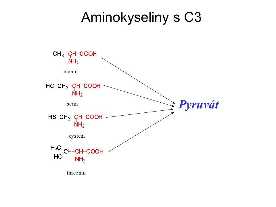 Aminokyseliny s C3 alanin serin cystein threonin Pyruvát