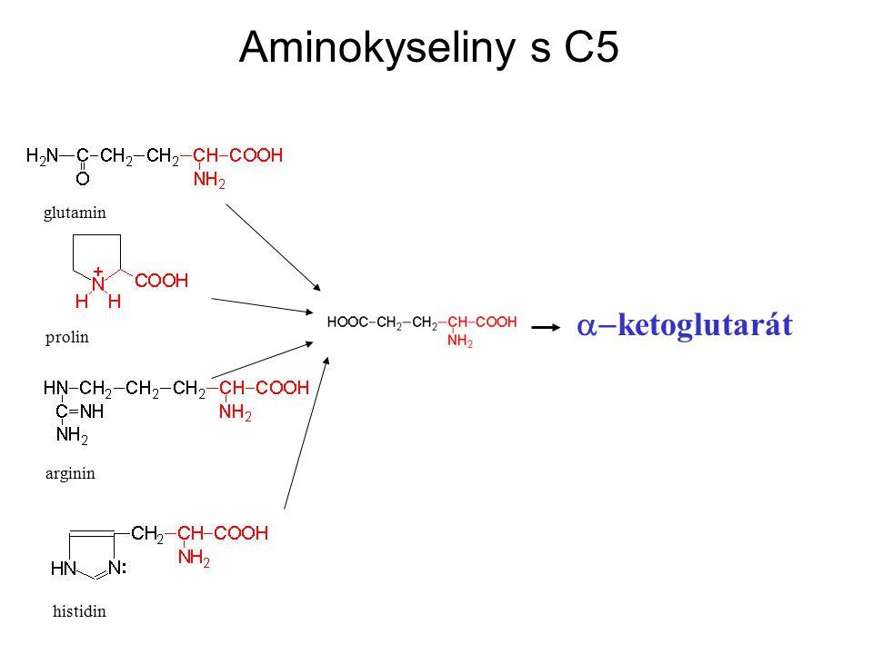 Aminokyseliny s C5 glutamin a-ketoglutarát prolin arginin histidin