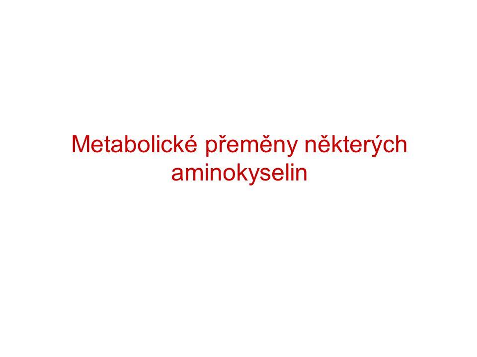 Metabolické přeměny některých aminokyselin