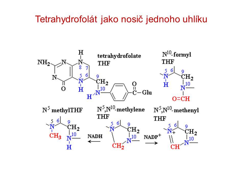 Tetrahydrofolát jako nosič jednoho uhlíku