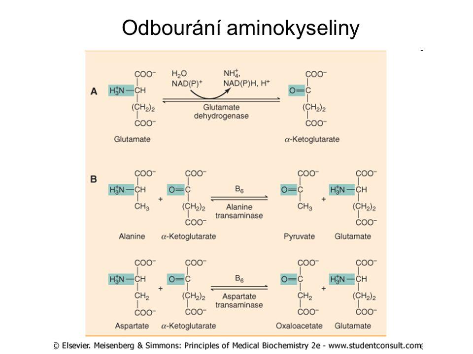 Odbourání aminokyseliny