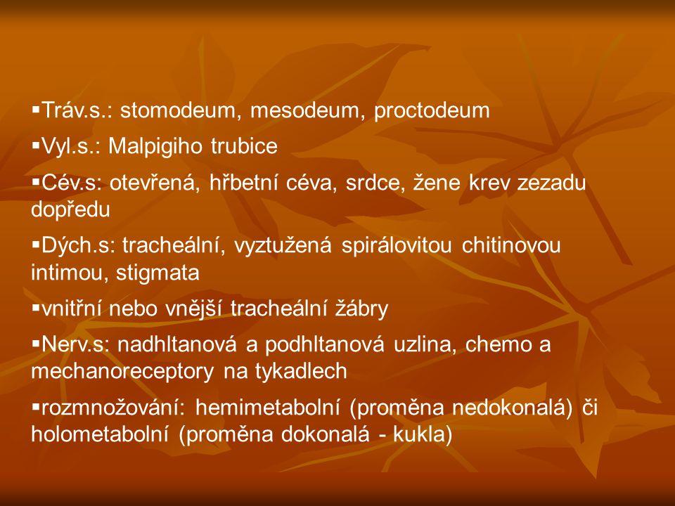 Tráv.s.: stomodeum, mesodeum, proctodeum