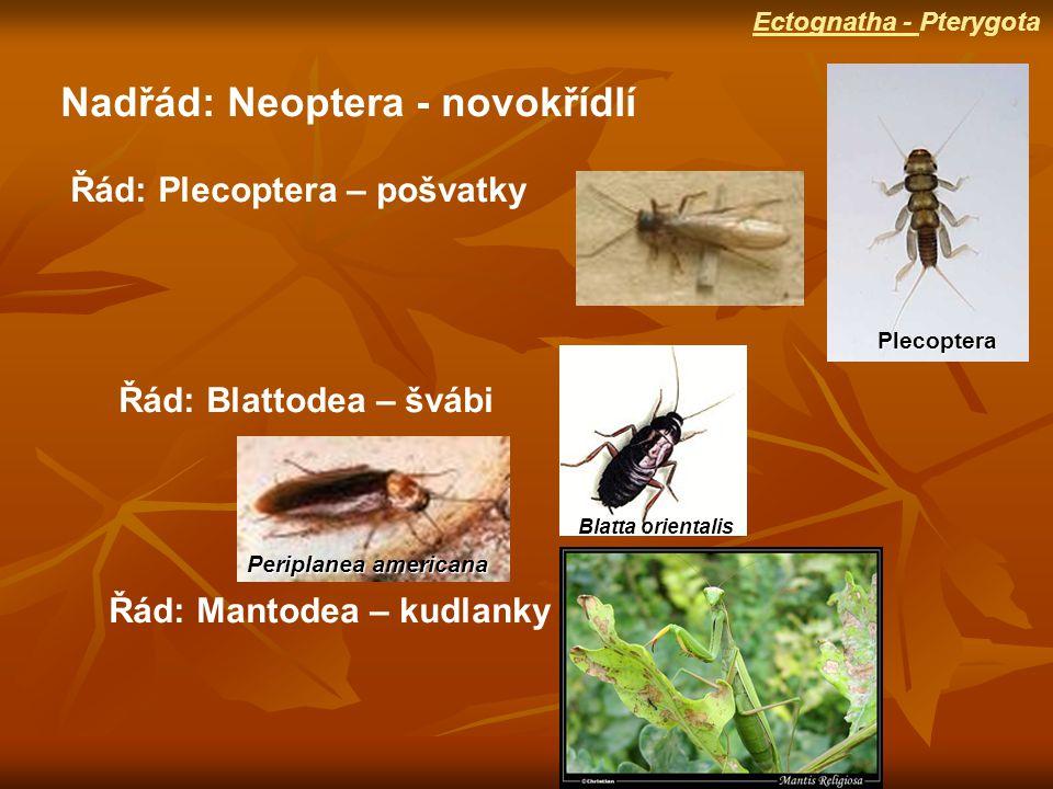 Nadřád: Neoptera - novokřídlí