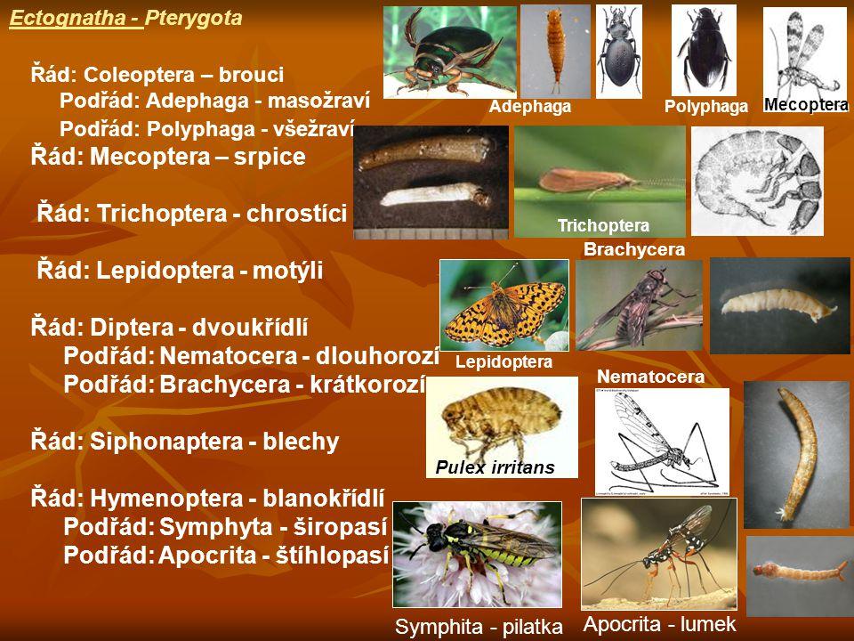 Řád: Mecoptera – srpice Řád: Trichoptera - chrostíci