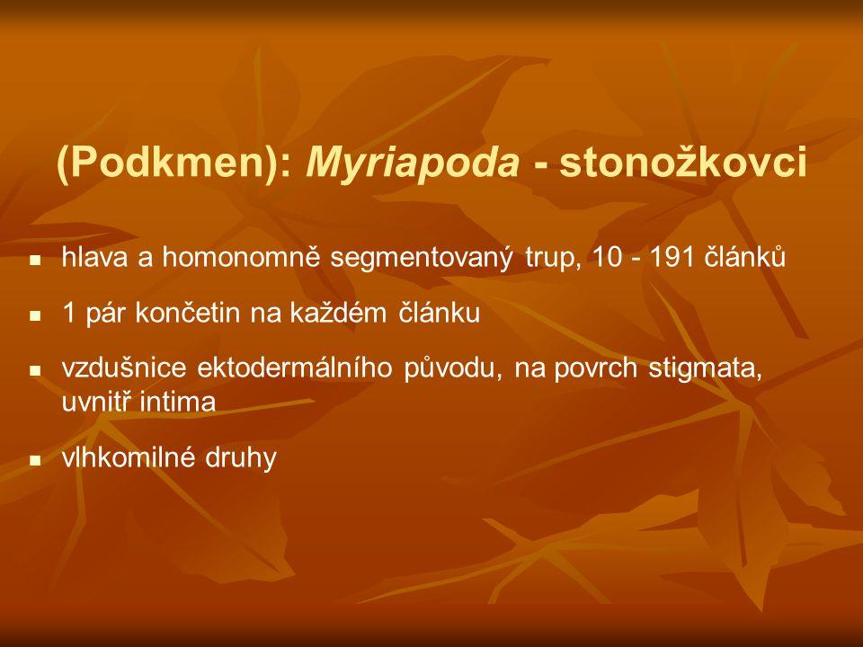(Podkmen): Myriapoda - stonožkovci