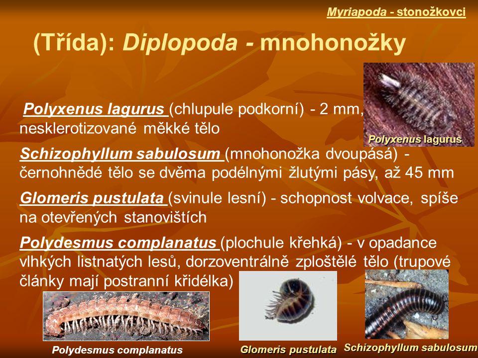 (Třída): Diplopoda - mnohonožky