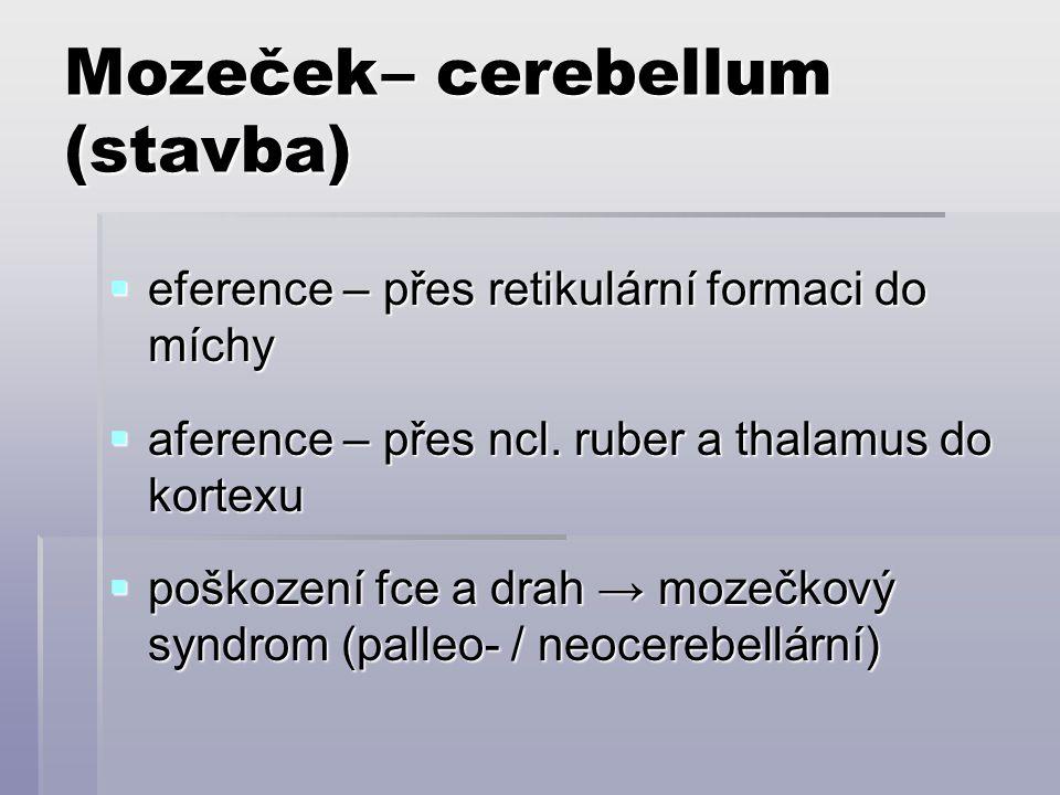 Mozeček – cerebellum (stavba)
