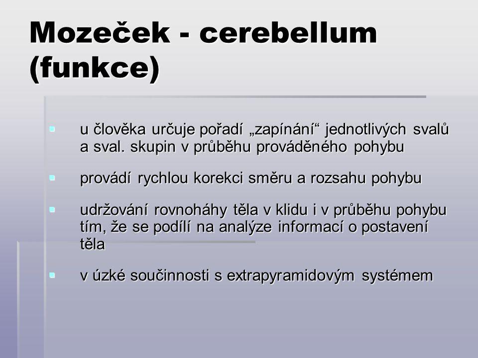 Mozeček - cerebellum (funkce)