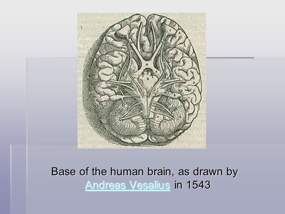 Base of the human brain, as drawn by Andreas Vesalius in 1543