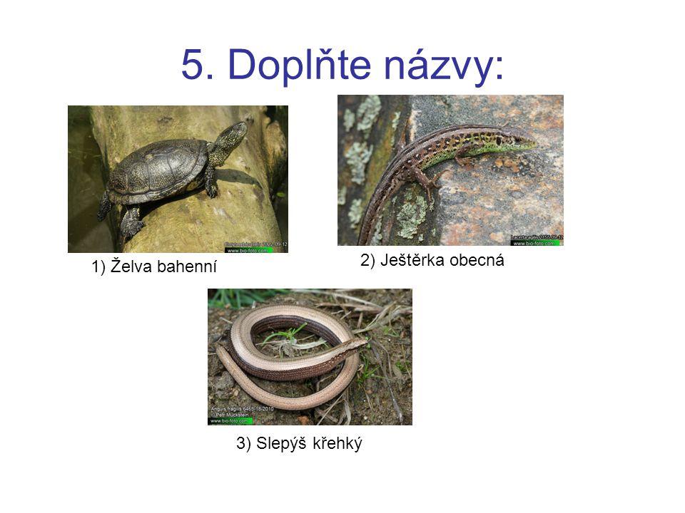 5. Doplňte názvy: 2) Ještěrka obecná 1) Želva bahenní 3) Slepýš křehký