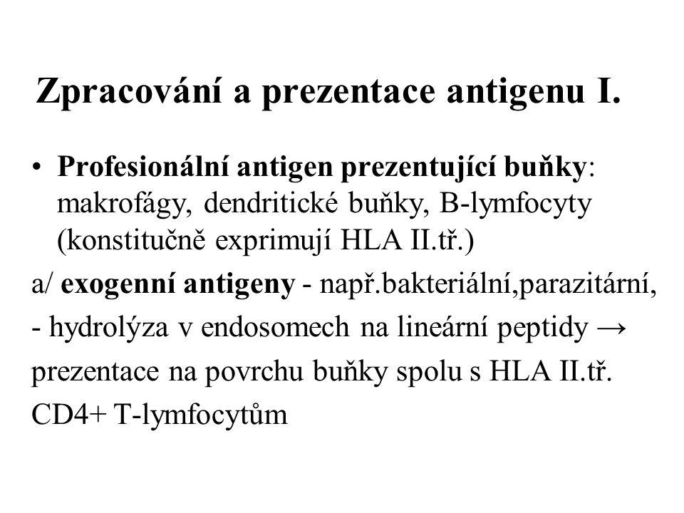 Zpracování a prezentace antigenu I.