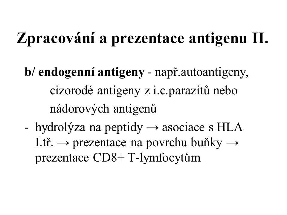 Zpracování a prezentace antigenu II.