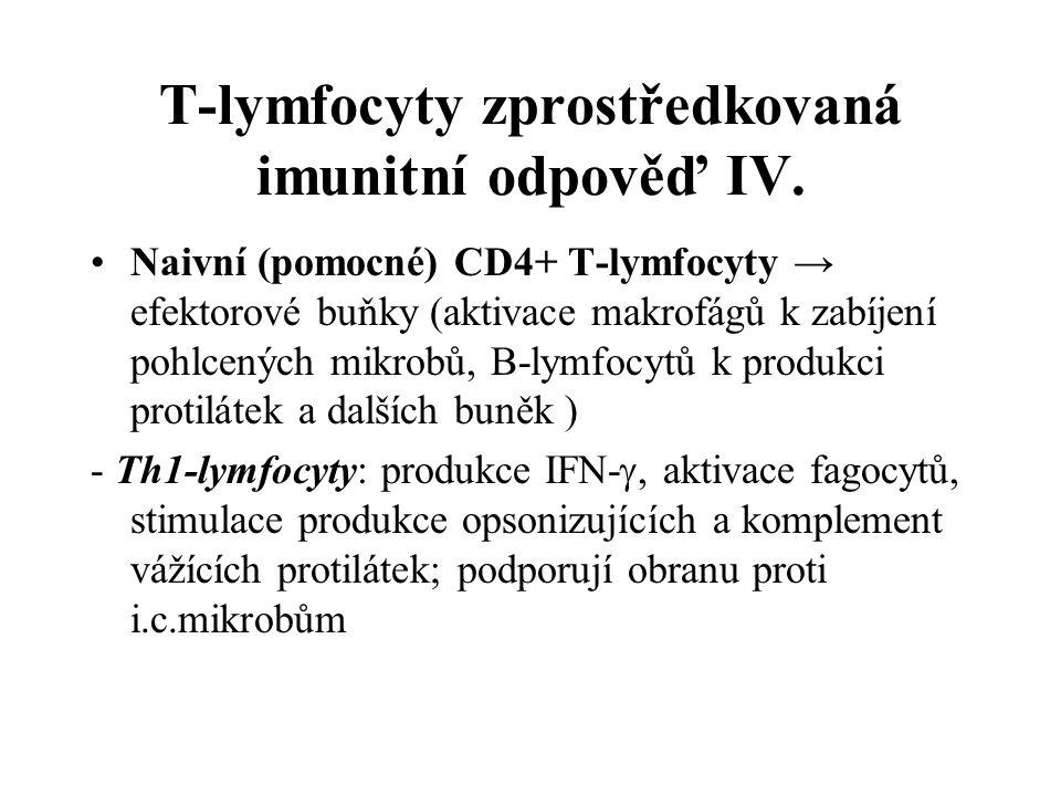 T-lymfocyty zprostředkovaná imunitní odpověď IV.