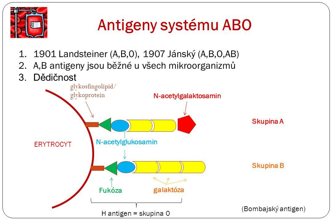 Antigeny systému ABO 1901 Landsteiner (A,B,0), 1907 Jánský (A,B,O,AB)