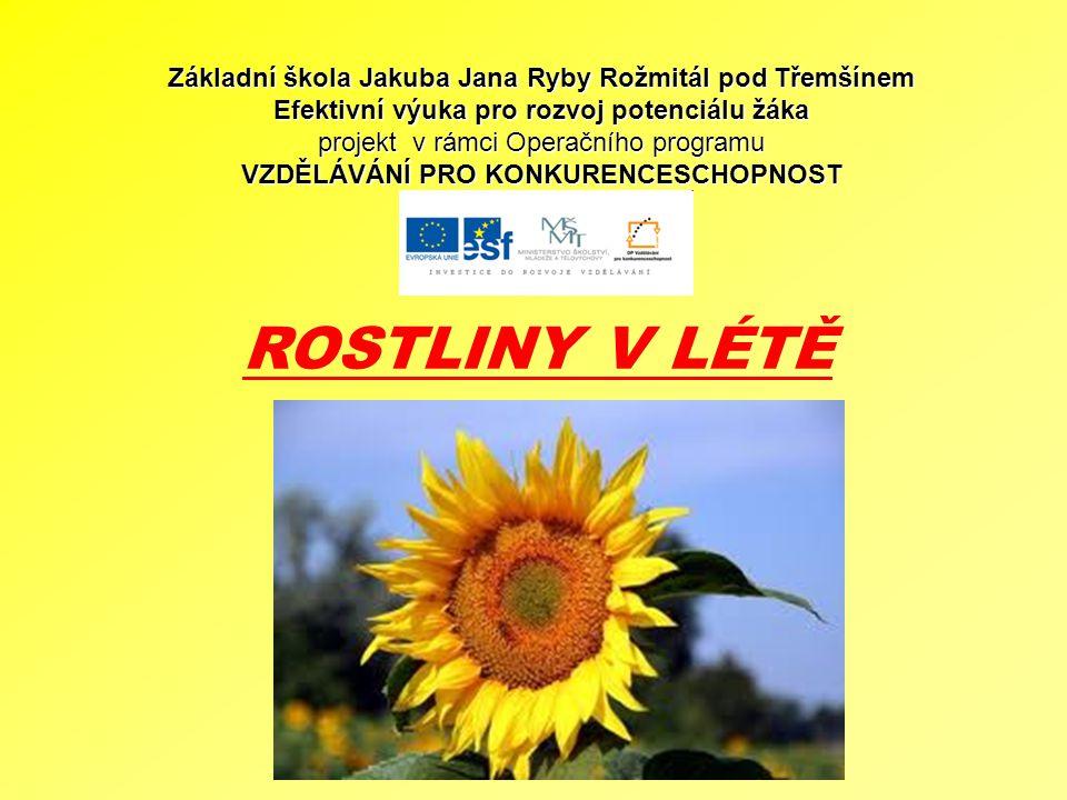 ROSTLINY V LÉTĚ Základní škola Jakuba Jana Ryby Rožmitál pod Třemšínem