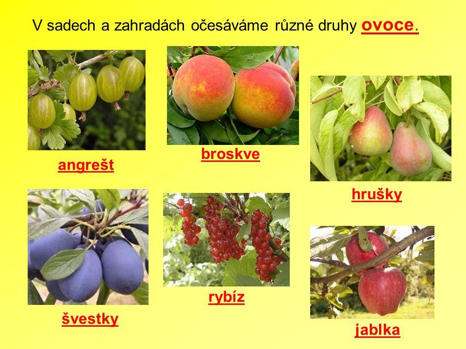 V sadech a zahradách očesáváme různé druhy ovoce.