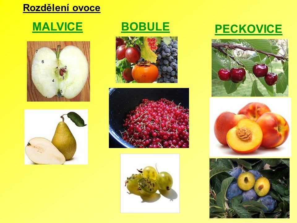 Rozdělení ovoce MALVICE BOBULE PECKOVICE