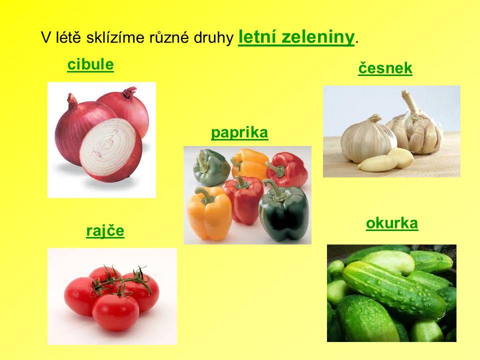 V létě sklízíme různé druhy letní zeleniny.