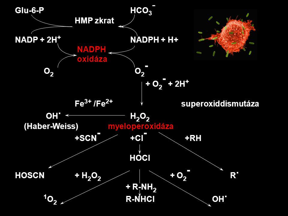 Glu-6-P HCO3- HMP zkrat. NADP + 2H+ NADPH + H+ NADPH. oxidáza. O2 O2- + O2- + 2H+ Fe3+ /Fe2+ superoxiddismutáza.