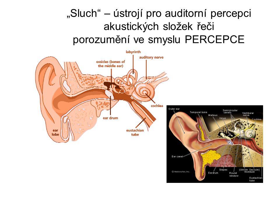 """""""Sluch – ústrojí pro auditorní percepci akustických složek řeči porozumění ve smyslu PERCEPCE"""