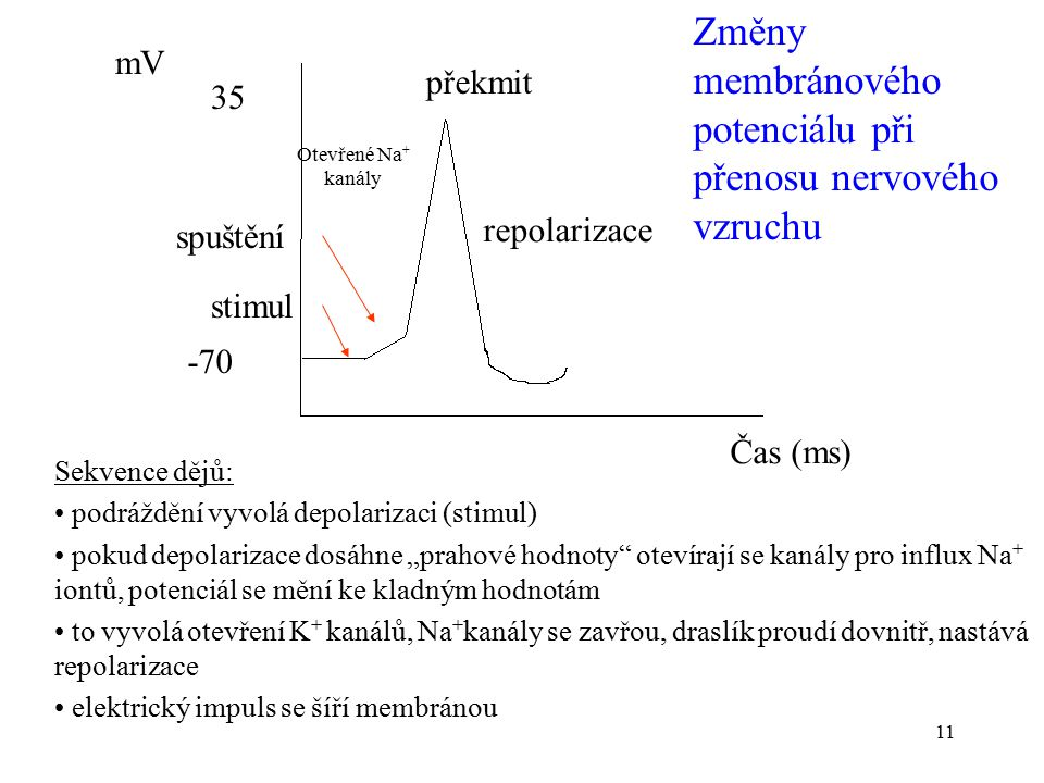 Změny membránového potenciálu při přenosu nervového vzruchu