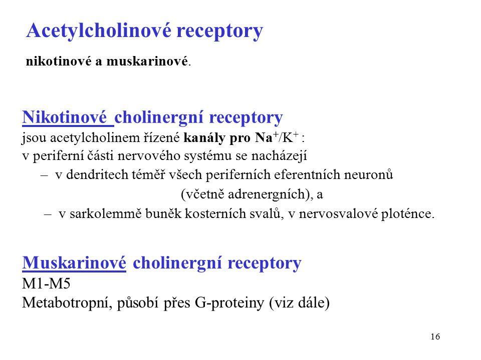 Acetylcholinové receptory