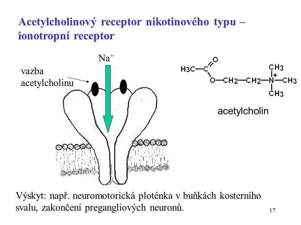 Acetylcholinový receptor nikotinového typu – ionotropní receptor