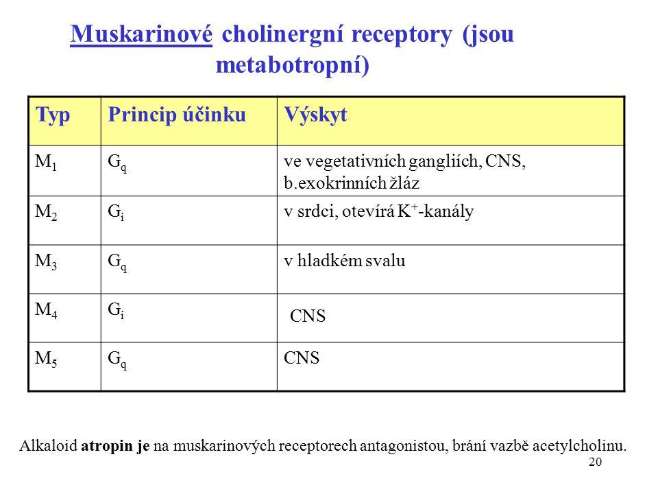 Muskarinové cholinergní receptory (jsou metabotropní)