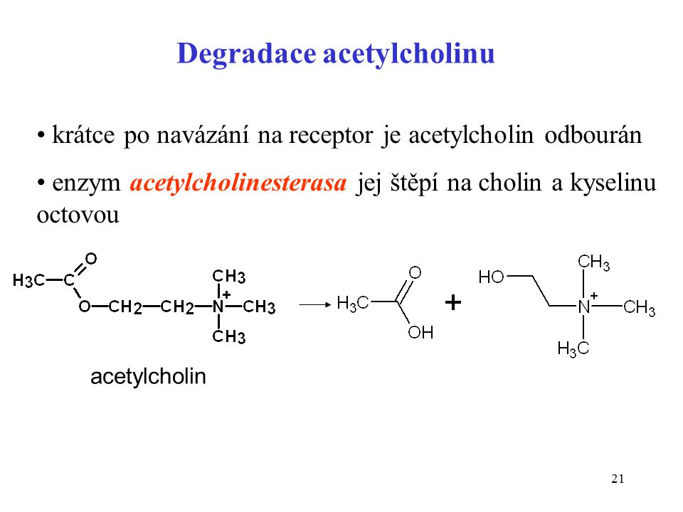 Degradace acetylcholinu