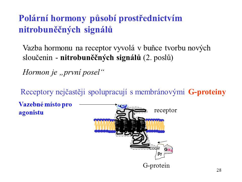 Polární hormony působí prostřednictvím nitrobuněčných signálů
