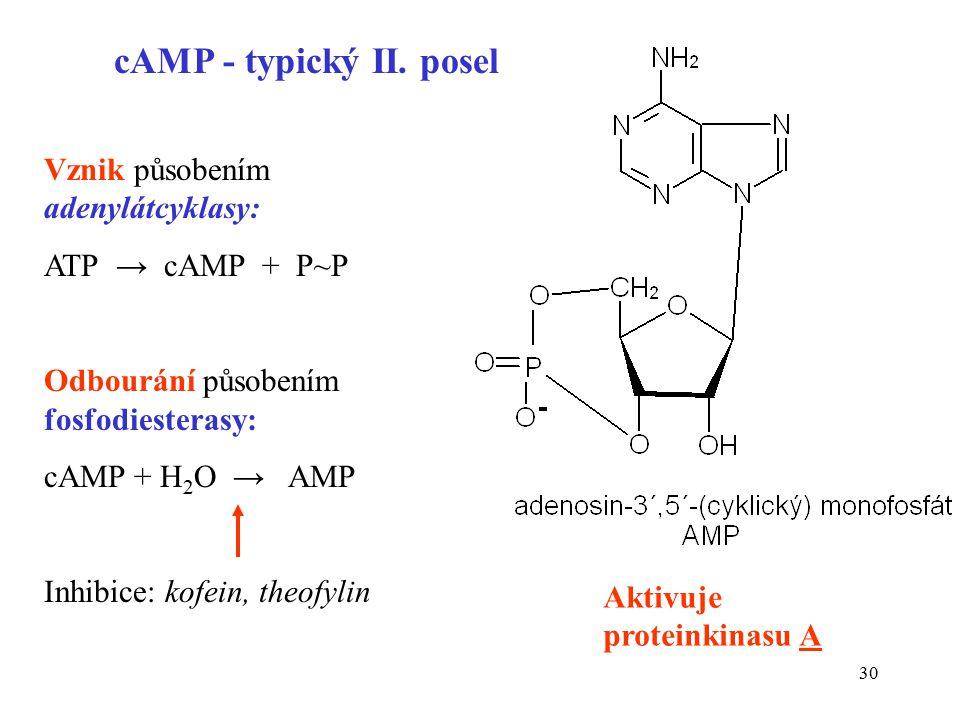 cAMP - typický II. posel Vznik působením adenylátcyklasy: