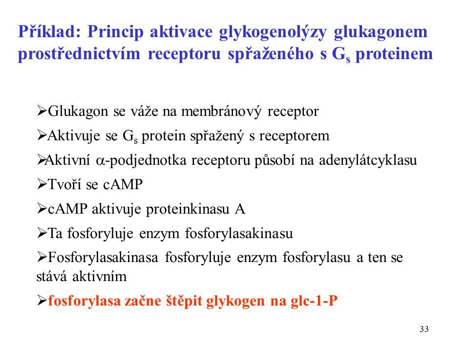 Příklad: Princip aktivace glykogenolýzy glukagonem prostřednictvím receptoru spřaženého s Gs proteinem