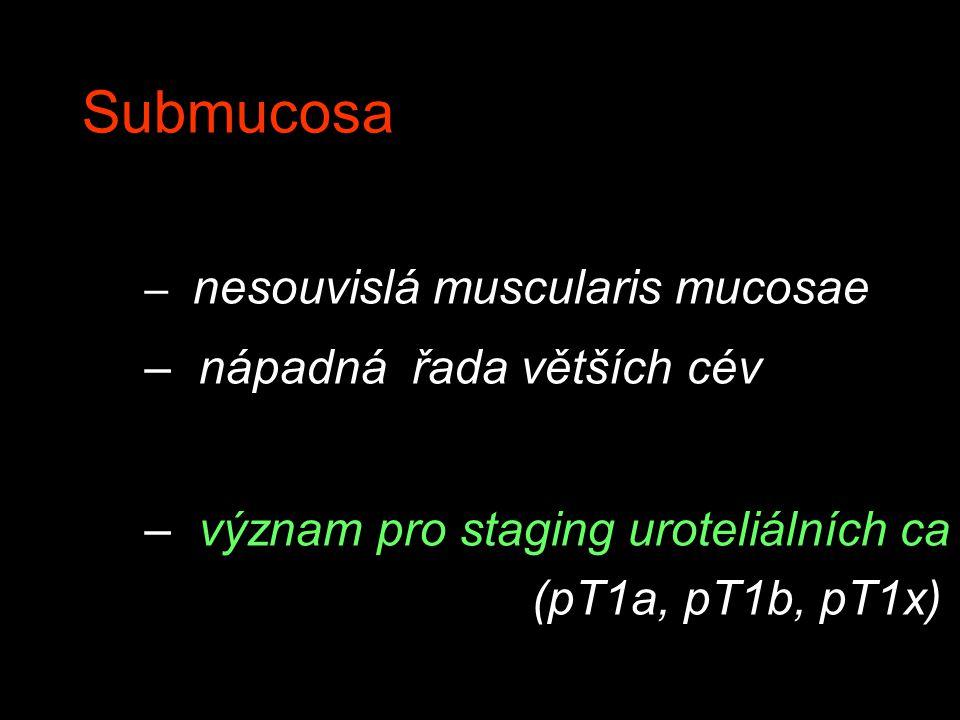 Submucosa nápadná řada větších cév
