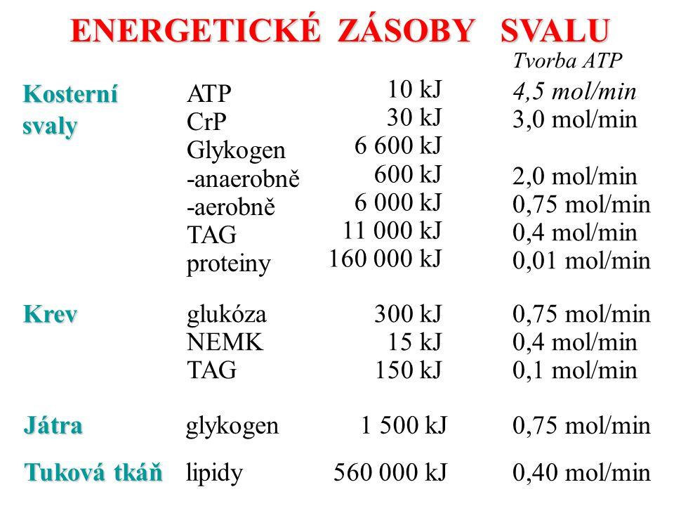 ENERGETICKÉ ZÁSOBY SVALU