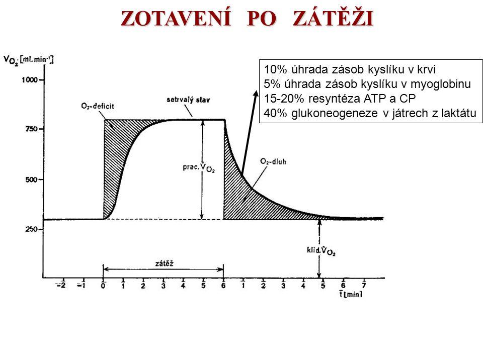 ZOTAVENÍ PO ZÁTĚŽI 10% úhrada zásob kyslíku v krvi