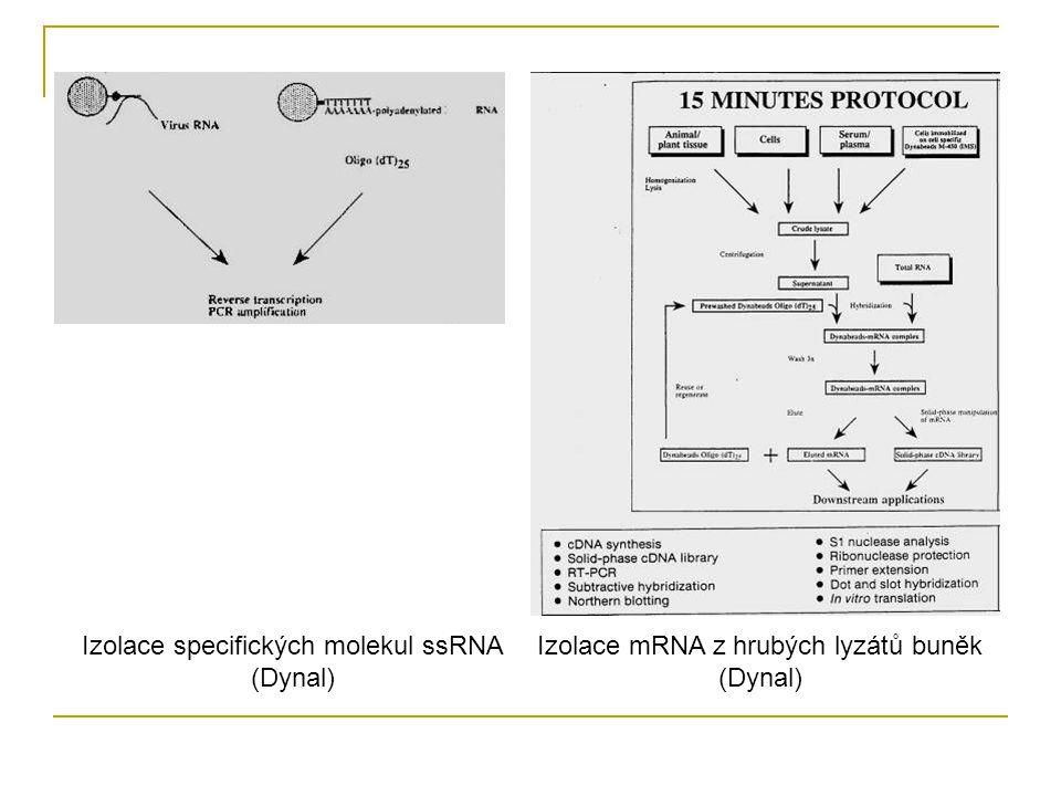 Izolace specifických molekul ssRNA (Dynal)