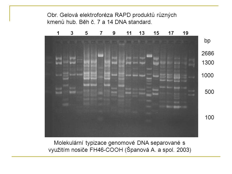 Obr. Gelová elektroforéza RAPD produktů různých kmenů hub. Běh č