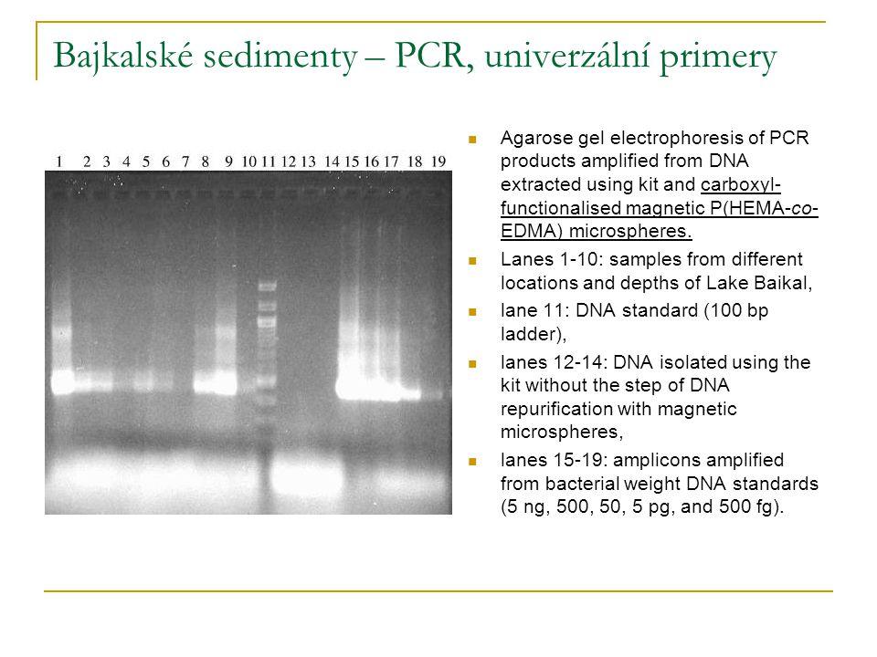 Bajkalské sedimenty – PCR, univerzální primery