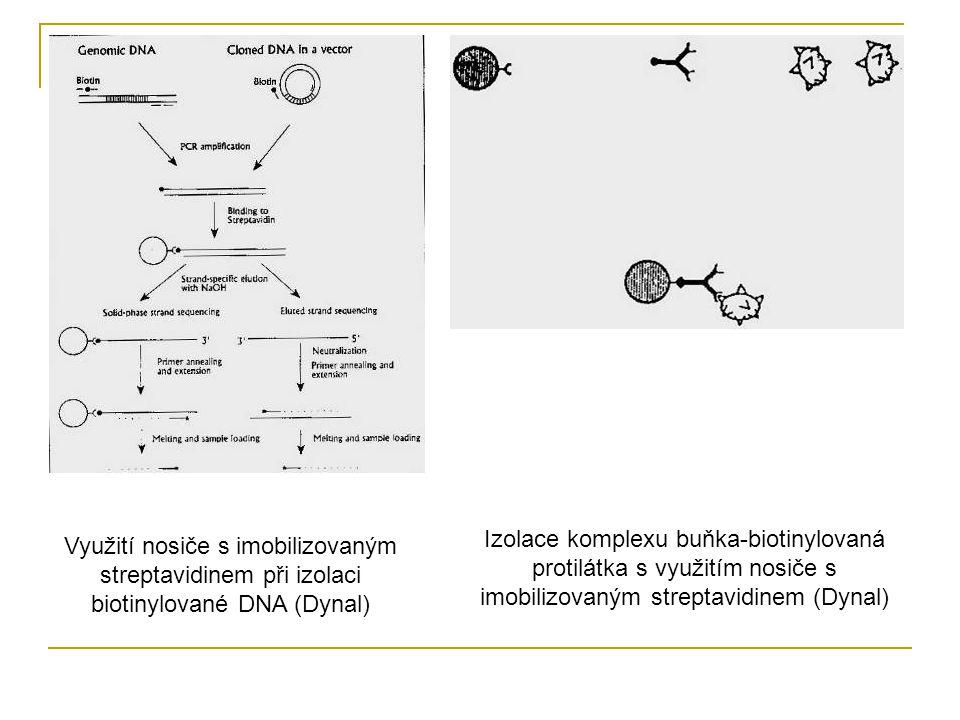 Izolace komplexu buňka-biotinylovaná protilátka s využitím nosiče s imobilizovaným streptavidinem (Dynal)