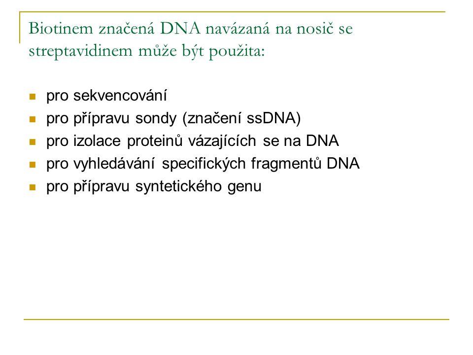 Biotinem značená DNA navázaná na nosič se streptavidinem může být použita: