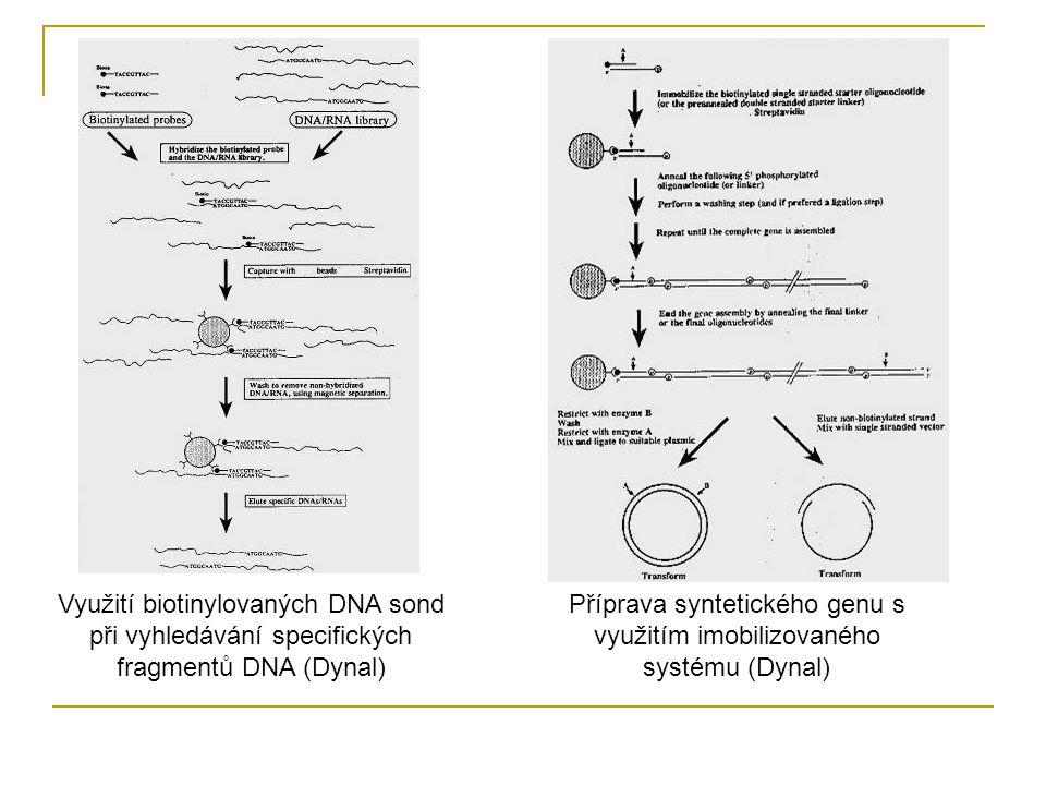 Příprava syntetického genu s využitím imobilizovaného systému (Dynal)