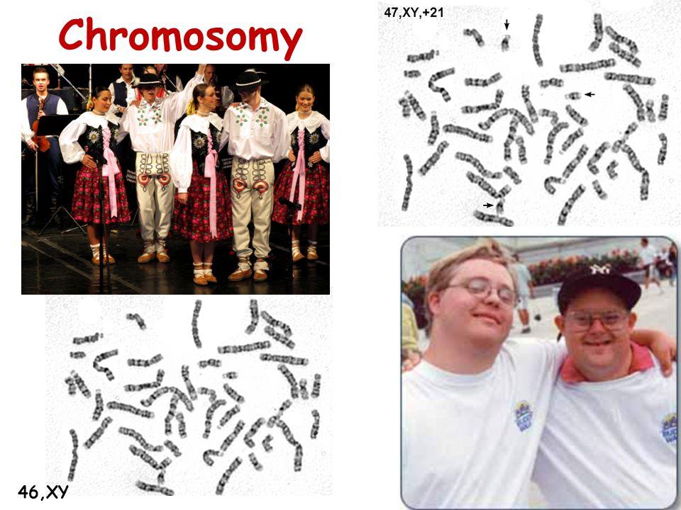 Chromosomy 46,XY