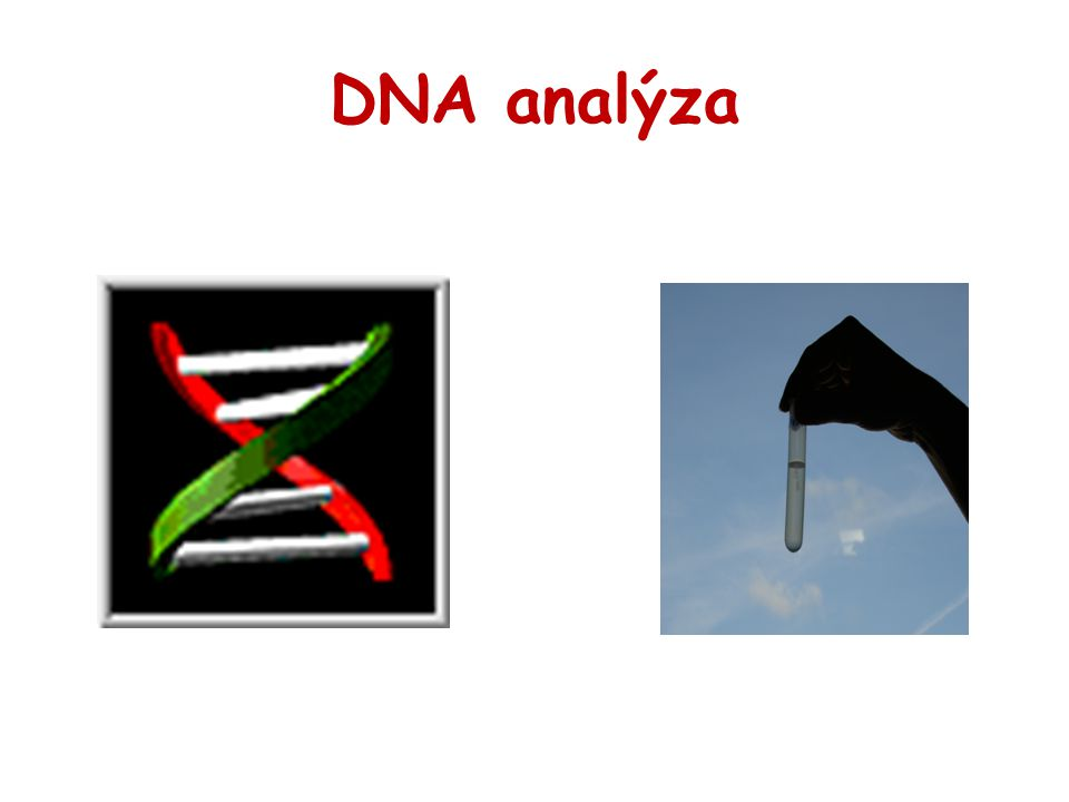 DNA analýza