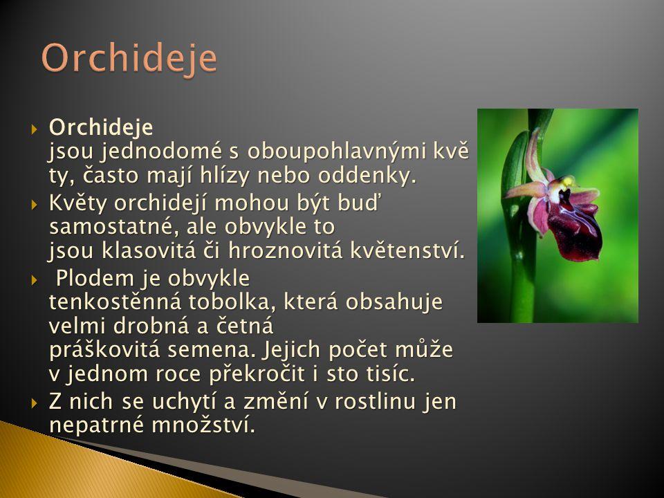 Orchideje Orchideje jsou jednodomé s oboupohlavnými kvě ty, často mají hlízy nebo oddenky.