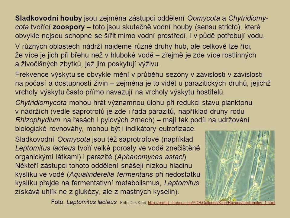 Sladkovodní Oomycota jsou též saprotrofové (například
