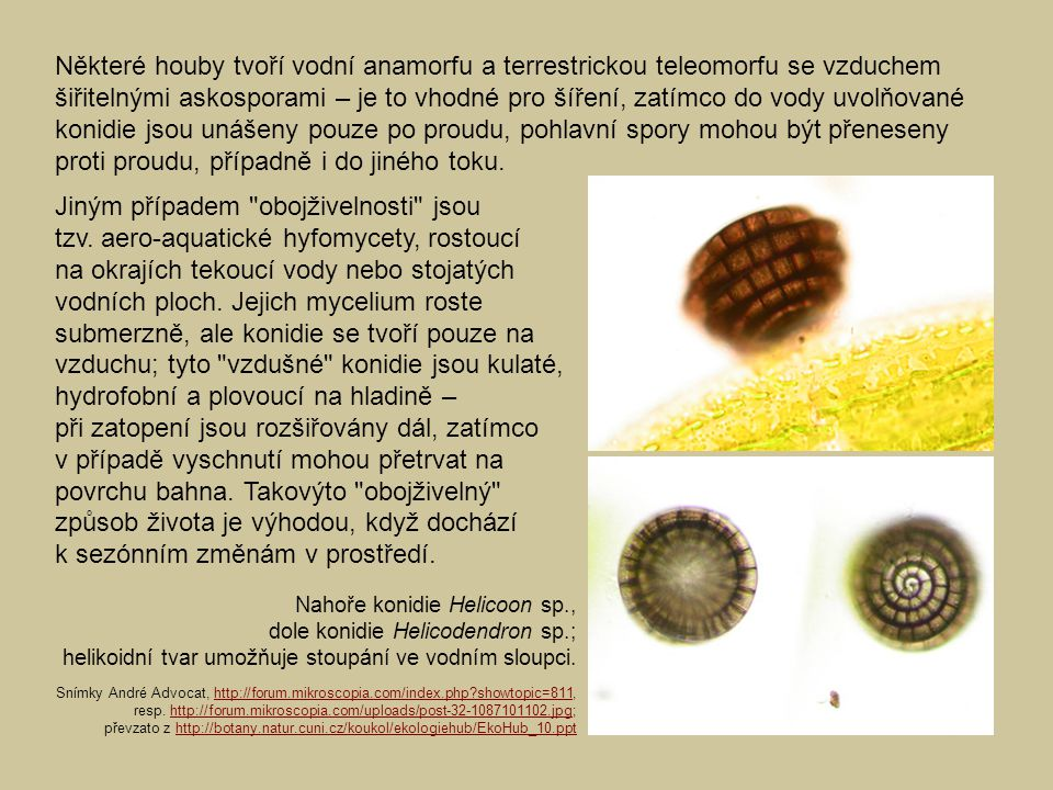Některé houby tvoří vodní anamorfu a terrestrickou teleomorfu se vzduchem šiřitelnými askosporami – je to vhodné pro šíření, zatímco do vody uvolňované konidie jsou unášeny pouze po proudu, pohlavní spory mohou být přeneseny proti proudu, případně i do jiného toku.