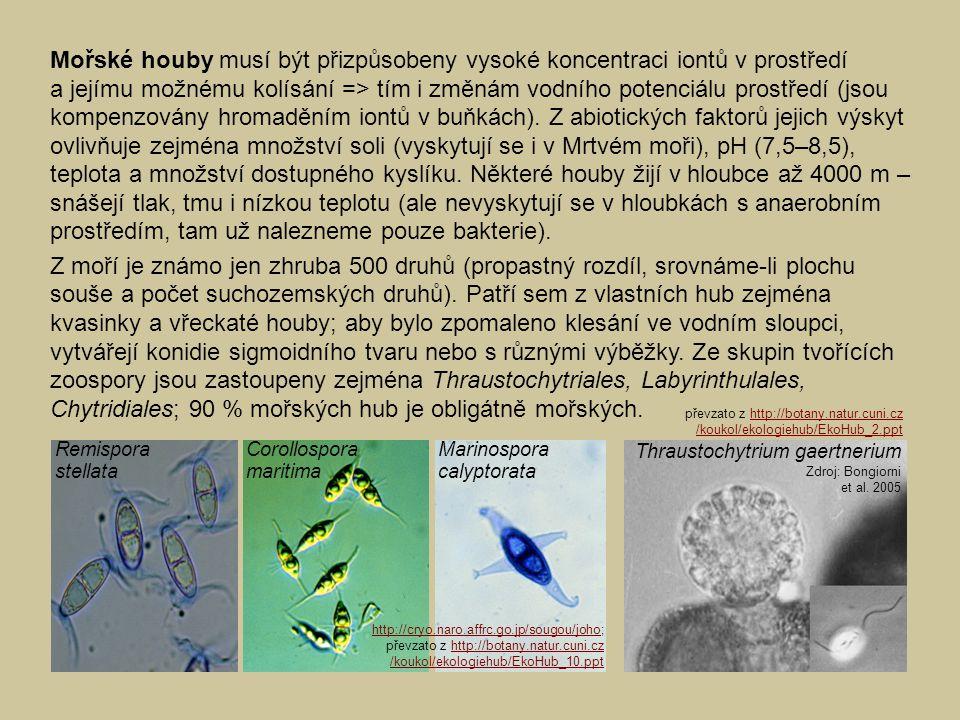 Thraustochytrium gaertnerium