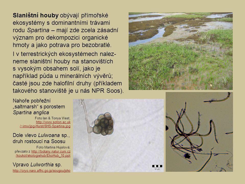 časté jsou zde halofilní druhy (příkladem
